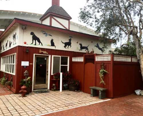 Veterinarian in Encinitas, CA
